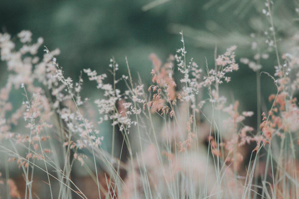 flora-flowers-grass-nature-268261